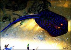 lighting in the dark ray fis Light In The Dark, Light Blue, The Darkest, Fish, Lighting, Pets, Animals, Animales, Animaux