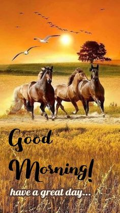 Good Morning Msg, Morning Wish, Good Morning Quotes, Have A Great Day, Good Day, Morning Humor, Funny Morning, Morning Images, Moose Art