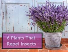 six plants that repel insects.