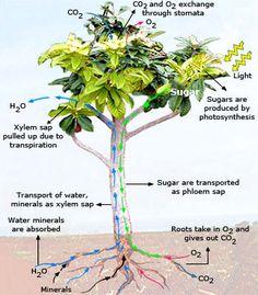 What is Respiratory System? Learn @ http://www.wonderwhizkids.com ...