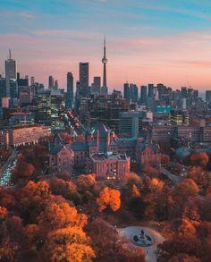 Toronto Skyline, New York Skyline, Ontario, Ladies Who Lunch, Sauvignon Blanc, Cn Tower, San Francisco Skyline, Compliments, Africa