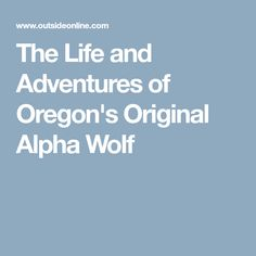 The Life and Adventures of Oregon's Original Alpha Wolf
