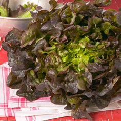 Der Eichblattsalat verdankt seinen Namen seinen aromatischen Blättern, deren Form an Eichenlaub erinnert. Die weichen Blätter haben knackige, saftige Stiele und schmecken leicht nussig.