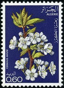 Stamp: Cherry (Algeria) (Flowering trees) Mi:DZ 718,Sn:DZ 607,Yt:DZ 679