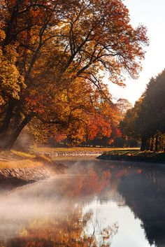 "drxgonfly: "" Autumn Fog II (by Christian Schweitz) """