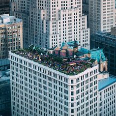 Floresta no telhado  Rooftop jungle #achadosdasemana by andre_pilli