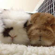 2 Noses....Eddy and Rambo. Love those names for bunnies :))