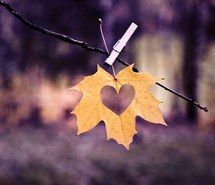 Inspiring picture fall, leaf, autumn, heart. Resolution: 500x500. Find the picture to your taste!