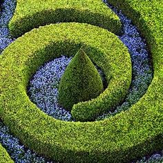 Formal Gardens Boxwood hedge Swirl with blue blossoms Topiary Garden, Topiary Trees, Garden Art, Garden Design, Formal Gardens, Outdoor Gardens, Gardening Websites, Maze Design, Parks