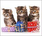 Donate Your Birthday - Cat Care Behavior Ad