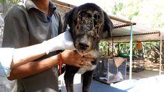 7 Animal Aid Rescue India Ideas Rescue Team Rescue Dogs