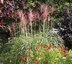 using grasses in landscaping - Google Search