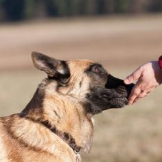 Dogs 26 #Dog #dogs #animal #animals #nature #paw #photo #photography #fliiby #images #yyazilim #people #nature