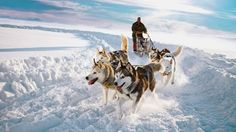 Trineo de huskies. Finlandia