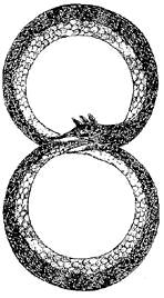 Ouroboros Above and Below