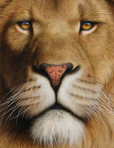 """without-fear-and-grief: """" Fantastic animal paintings by Peter Höhsl. Beautiful Lion, Animals Beautiful, Cute Animals, Wild Creatures, Lovely Creatures, Animal Sketches, Animal Drawings, Lion Tattoo Sleeves, Lion Love"""