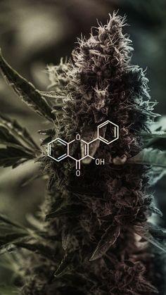 me cafe Amorè. Cannabis Wallpaper, Weed Wallpaper, Marijuana Art, Marijuana Plants, Cannabis Plant, Weed Backgrounds, Wallpaper Backgrounds, Planta Cannabis, Rauch Fotografie
