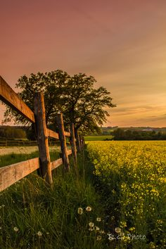 Golden hour by Robin Grunewald on 500px