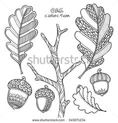 Nature elements vector set in doodle style. Floral, ornate, decorative, tribal, forest design elements. Black and white illustration. Oak branch, leaves and acorns. Zentangle coloring book page - stock vector