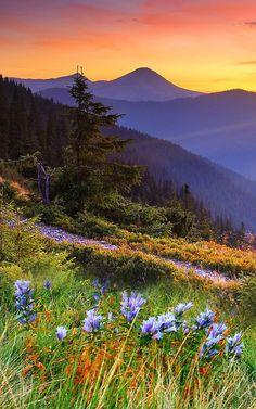 Washington State, mountain wildflowers