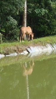 Alimentação de cavalos: a água na nutrição dos cavalos