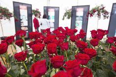 Visit Roses (@VisitRoses)   Twitter