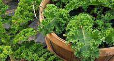 How to strip kale in a flash!