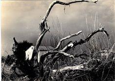 Mario Giacomelli :: La casa e l'albero, 1956