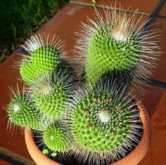 Succulent Terrarium, Cacti And Succulents, Planting Succulents, Air Plants, Garden Plants, House Plants, Flora, Cactus Plante, Plantas Bonsai