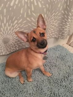 Adopt Plum!  Isn't she precious!