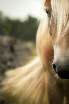 When I was littler (its been a long time) I used to ride a horse named King at summer camp, he was so big and I wasn't even as tall as his shoulder but he was a big sweetheart. I miss riding a lot, I still remember how it felt. I wish I knew someone with horses that would let me ride them.