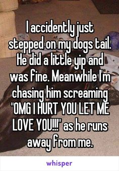"""Someone from Farmington Hills, Michigan, US posted a whisper, which reads """"I accidently just stepped on my dogs tail. He did a little yip and was fine. Meanwhile I'm chasing him screaming """"OMG I HURT YOU LET ME LOVE YOU!"""" as he runs away from me. Really Funny Memes, Stupid Funny Memes, Funny Relatable Memes, Funny Texts, Funny Stuff, Let Me Love You, Let It Be, Whisper Quotes, Whisper App"""