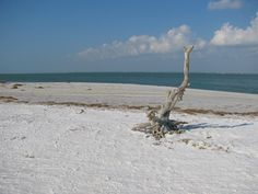 If you are looking for the beach walk of a lifetime then the white sand shores of Honeymoon Island State Park might be the place for you. Dog Beach, Beach Walk, Honeymoon Island, St Pete Beach, I Love The Beach, Clearwater Beach, Nature Center, Florida Vacation, Hiking Trails