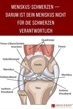 Erfahre die wahre Ursache von Meniskus-Schmerzen Test our exercises and learn everything about symptoms, causes and treatment methods: from our many years of experience in treating patients with menis Chest Routine, Types Of Muscles, Human Digestive System, Hip Opening Yoga, Muscle Imbalance, Anti Inflammatory Diet, Knee Pain, Bodybuilding Workouts, Health Education