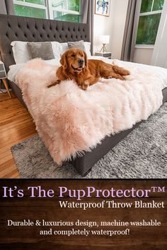 New Puppy, Puppy Love, Dog Blanket, Pet Life, Dogs Of The World, Pet Accessories, Dog Care, Dog Mom, Fur Babies