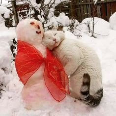 #🐈❄⛄#cat#cat_of_instagram #catlover #catlife #winter #snow #cold #crazycatlady #animal #kitty#meow #cutecat #cute #funnypictures #selfie #catoftheday #pet #cat_features #snowman #cato#kot #love #instacat ⛄❄🐈