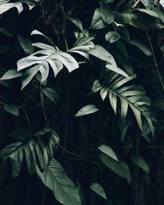 Plants aesthetic tropical minimalism minimalist – Best Home Plants Plant Aesthetic, Dark Green Aesthetic, Plants Are Friends, Exotic Flowers, Flowers Nature, Green Plants, Bonsai, Planting Flowers, Nature Photography