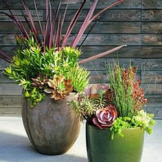 Plum-colored foliage is a rich accent against soft greens in these easy-care containers. Arrange taller plants in the center or back, trailers near the pot's edges. For immediate effect, choose large plants and big pots Succulent Landscaping, Planting Succulents, Garden Landscaping, Planting Flowers, Succulent Plants, Tall Succulents, Succulent Outdoor, Low Water Landscaping, Succulents Drawing