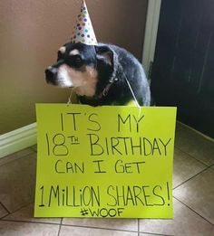 Wish this nice doggy a happy birthday Cute Funny Animals, Funny Animal Pictures, Cute Baby Animals, Funny Dogs, Animals And Pets, Cute Puppies, Cute Dogs, Dogs And Puppies, Doggies