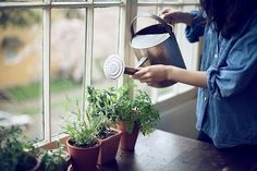 i SO wanna grow a little windowsill garden!