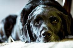 »Auch ein Hund ist schließlich nur ein Mensch.« by Joerg Piechotka