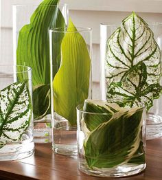 Choose leaves from end of season greenery like hostas etc. in different sizes and hues including solid and variegated varieties. Fill the vases with an inch of water and carefully fit the leaves into the vase, letting the bottoms sit in the water.