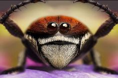 Smile! Close-up Photographs of Insects « Randommization