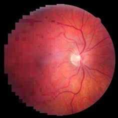 Reverse engineering improves the performance of artificial retinas.