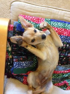 HOW NOT TO PICK A RESCUE DOG JULY 23, 2015 GRISHA STEWART (ABBA STAFF)	2 COMMENTS Bean waking up from a nap