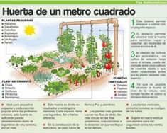 Mini Huerto #garden
