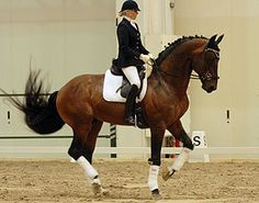Bitless Dressage. Beautiful, engaged piaffe...no bit, no spurs, and even some slack in the reins! Go bitless!