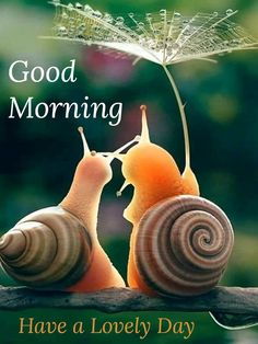 Happy Morning Quotes, Morning Greetings Quotes, Good Morning Flowers, Good Morning Messages, Good Morning Good Night, Good Morning Wishes, Morning Pictures, Good Morning Images, Morning Pics