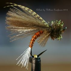 CDC Biot Caddis Emerger size 14, seen by Hans Weilenmann like emoticon By William Ensiferum