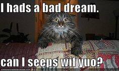 Discover and share Scary Cat Quotes. Explore our collection of motivational and famous quotes by authors you know and love. Funny Animal Quotes, Cat Quotes, Cute Funny Animals, Funny Animal Pictures, Funny Cute, Cute Cats, Funny Sayings, Funny Humor, Cat Sayings